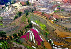 China is home to many rice terraces that claim the slopes of hilly or mountainous areas. Some spots have been cultivated for over 1000 years.