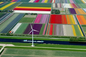 Each spring, the tulips in The Netherlands turn large parts of the country into a colorful patchwork.